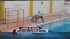 Leopard breaks into school, attacks man