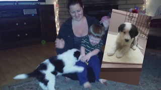 Local family heartbroken over loss of new puppy