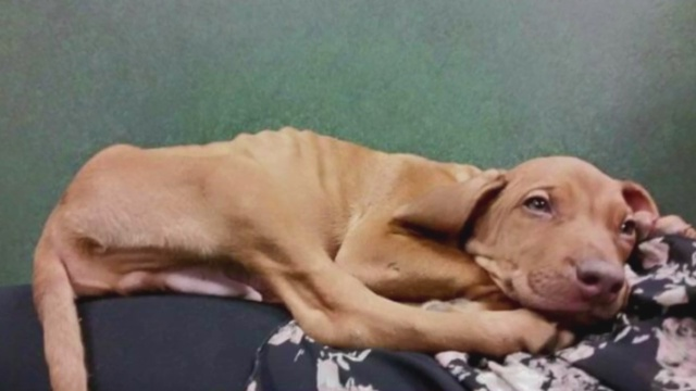 Animal lovers concerned over dog at pet store