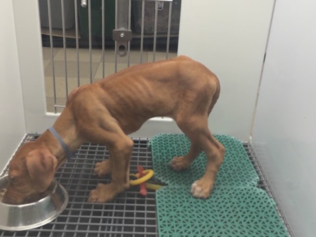 Animal lovers concerned over skinny dog at Henderson pet store