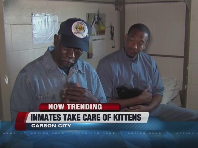 NOW TRENDING: Prisoners caring for kittens