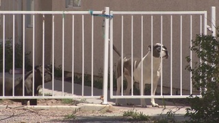 Neighbor rescues woman attacked by pit bull
