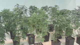 Out-of-state pot patients help local economy