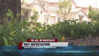 YOU ASK: Rat population on the rise