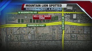 Mountain lion reportedly spotted at Vegas park