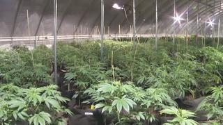 Marijuana could bring in billions of dollars