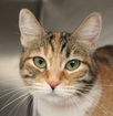 Animal Foundation waiving fees for select cats