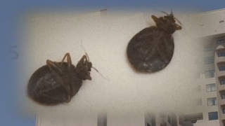 YOU ASK: Family says bed bugs ruined hotel stay