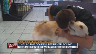 Nala reunited with family after missing six days