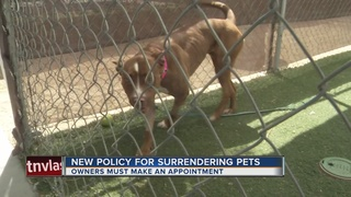 Appointments needed to surrender pets to shelter