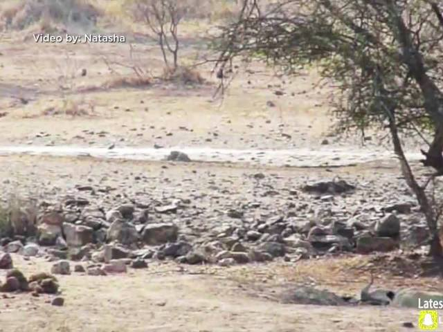 Right This Minute: Lion ambush fails when lion lands in water