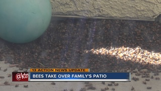 Pest control company responds to bees on patio