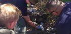 Henderson firefighters save dog from house fire