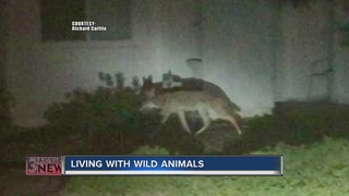 Neighbors fear for kids with coyotes in area