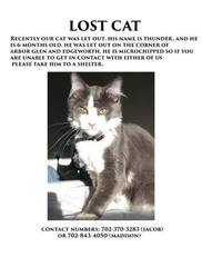 PHOTOS: Lost Pets in the Las Vegas Area