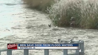 Men save deer from drowning in Iowa