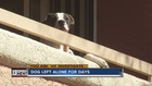 YOU ASK: Residents move out, leave dog