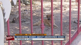 YOU ASK: Two dogs left in yard without food