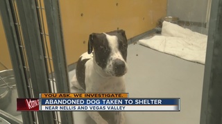 UPDATE: Abandoned dog is taken to shelter