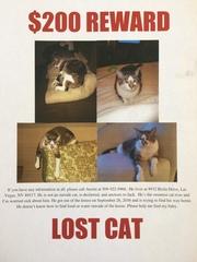 PHOTOS: Lost Pets in the Las Vegas Area