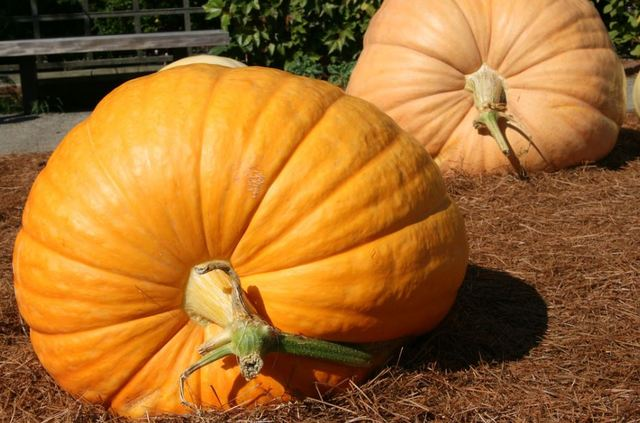 Winner named at giant pumpkin annual weigh-off in California