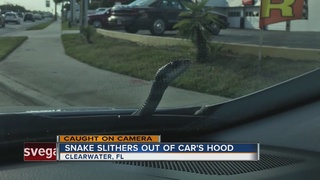 Florida man surprised by snake while driving
