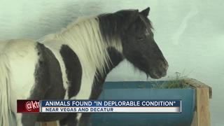 Animal cruelty unit rescues horses, birds