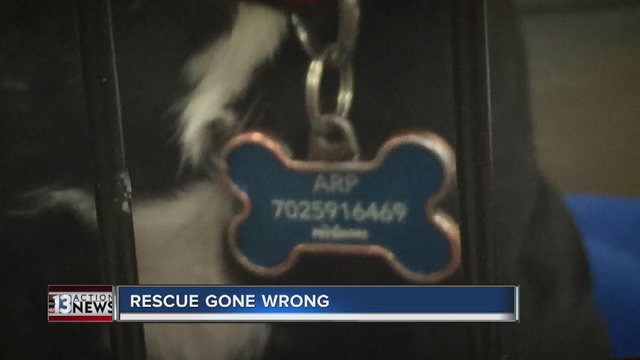 CONTACT 13: Dogs up for adoption despite ban