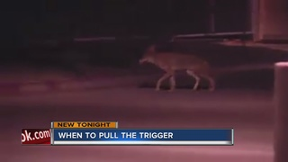 When can owners protect pets from predators?