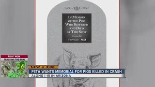 PETA creates memorial for pigs killed in crash