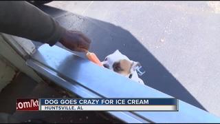 Dog goes crazy for ice cream man