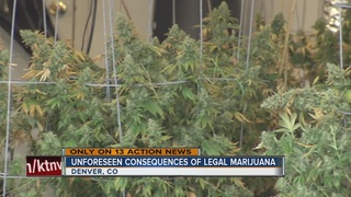 13 Action News travels to Denver for pot series