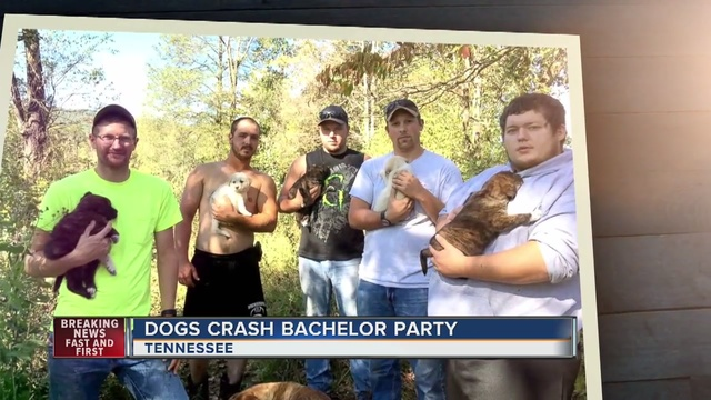Michigan men adopt stray dog, puppies at bachelor party