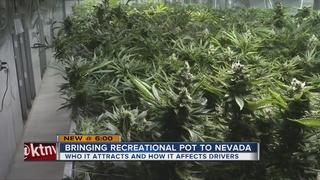 How does recreational marijuana affect tourism?
