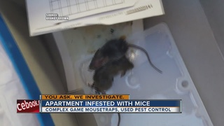 YOU ASK: Mice infested apartment in east Vegas