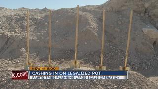 Paiute tribe to launch marijuana operation