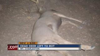 Eight deer illegally killed near Mt. Charleston