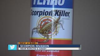 YOU ASK: Scorpions in Las Vegas apartment