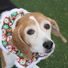 Animal Foundation discounting adoption fees