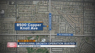 Growth operation busted near Durango, Gowan