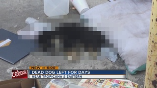 Woman: Animal Control won't pick up dead puppy