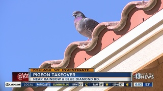 YOU ASK: Neighbors say pigeons are taking over