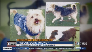 CONTACT 13: Hoarder wants seized dogs back