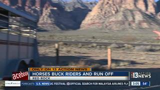 Horses buck, injure riders and run off