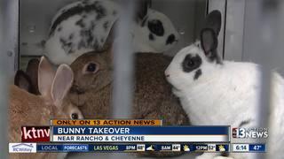 60 bunnies taken from elderly woman's home