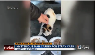 'Cat Daddy' says 3 of his cats were killed