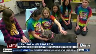 School club helps beloved dog with rare disease