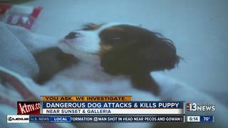 YOU ASK: Puppy killed by dog in neighborhood