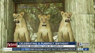 Original MGM lionesses celebrate birthday