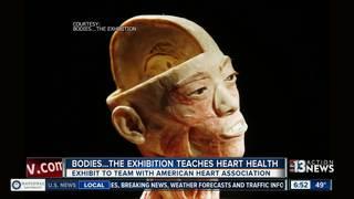 BODIES exhibit raises heart health awareness